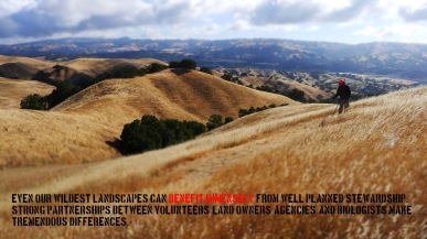 13-wildland stewardship