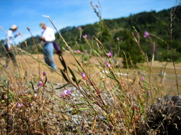 Slideshow for Bay Area Open Space Council