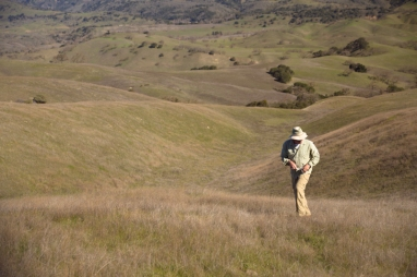 Dr. Stu Weiss collecting Bay Checkerspot larvae at Coyote Ridge
