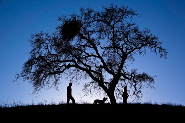 L-J Oak silhouette sml