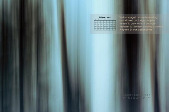 Feb 2013 Calendar desktop Lodgepoles - Lech Naumovich Photography A