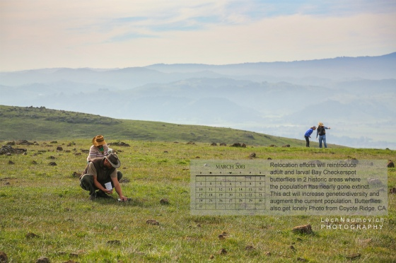 March 2013 Calendar desktop Coyote Ridge Checkerspots copy