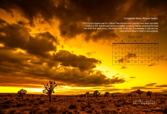 May 2013 Calendar desktop The Joshua Tree - Lech Naumovich Photography copy