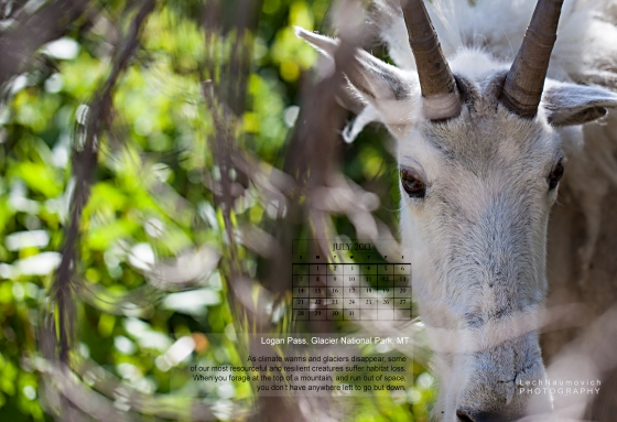 July 2013 Calendar desktop Mountain Goat - Lech Naumovich Photography