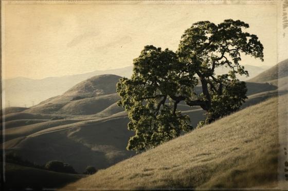 fernandez oak textured