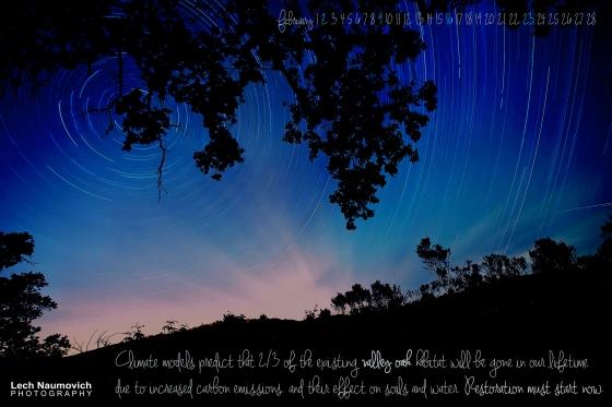 Valley oak 2-2014 Lech Naumovich Photography