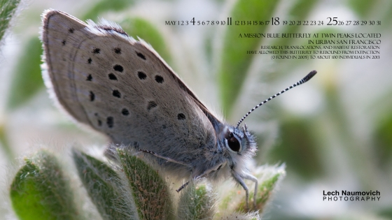 May 2014 Calendar desktop Mission Blue Restoration - Lech Naumovich Photography
