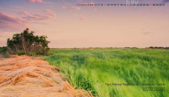 July 2014 Desktop calendar  - Camargue Lech Naumovich Photography copy