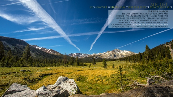 August 2014 Desktop calendar - The Pine March - Lech Naumovich Photography