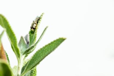 fly macro MYN-3475