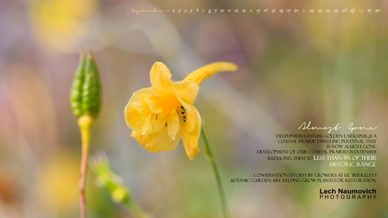 September 2014 Calendar desktop Almost Gone - Lech Naumovich Photography