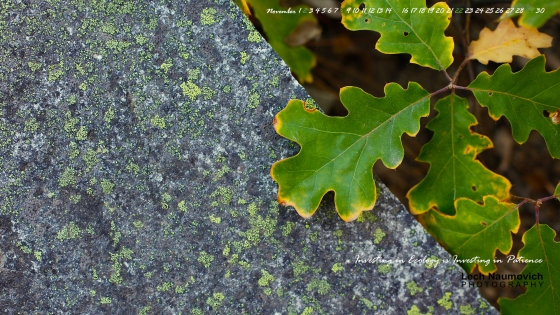 November 2014 Calendar desktop Stress and Opportunity - Lech Naumovich Photography