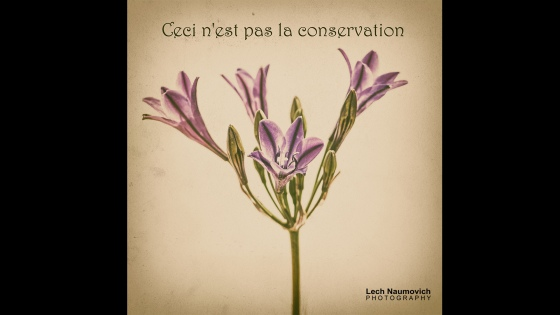 January 2015 Calendar desktop Ceci nest pas la conservation - Lech Naumovich Photography (1)